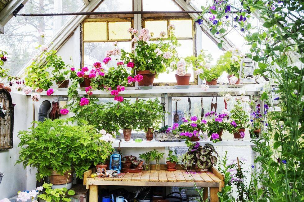 Här är Sveriges härligaste växthus