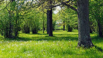 5 betagande trädgårdar att besöka i Sommarsverige