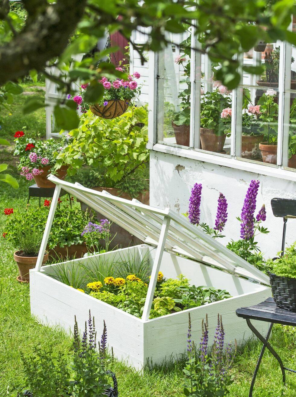 Gör det själv – drivbänk för lilla trädgårdslandet