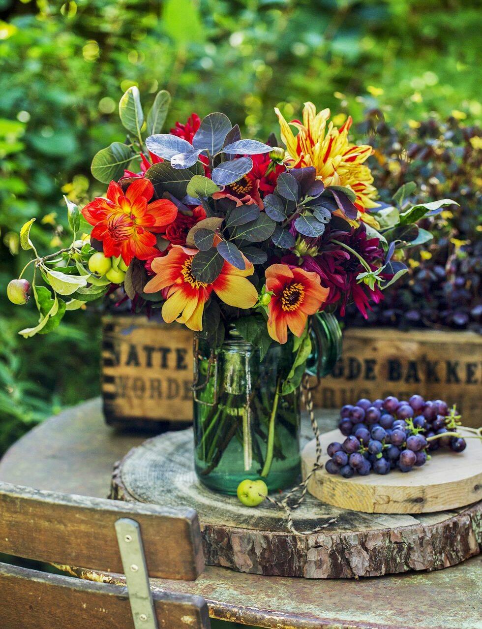 Lys upp sensommaren med dahlior – så här sköter du dem