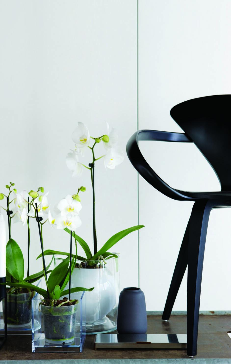 Så här sätter du stilen med orkidéer – 6 fina arrangemang