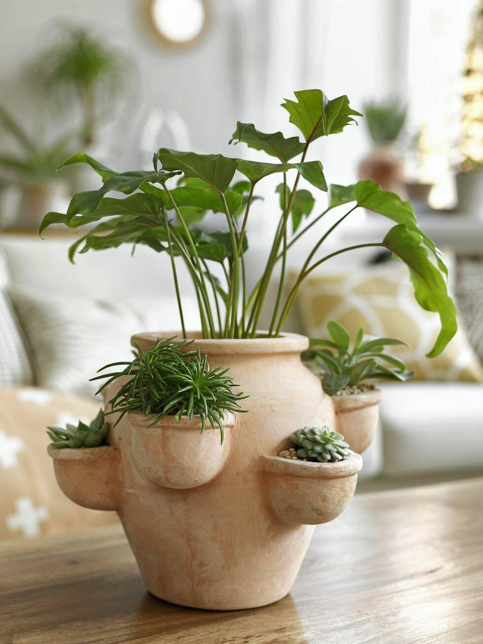 Så här inreder du stilrent och naturligt med lättskötta växter
