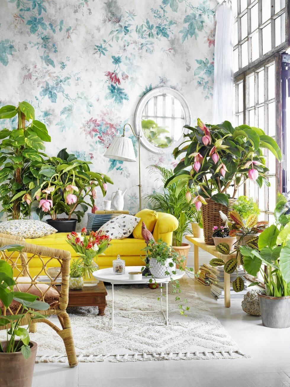 Så här inreder du skönt bohemiskt med växter