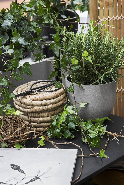 Granit har massor av fina nyheter för din grönskande vårbalkong