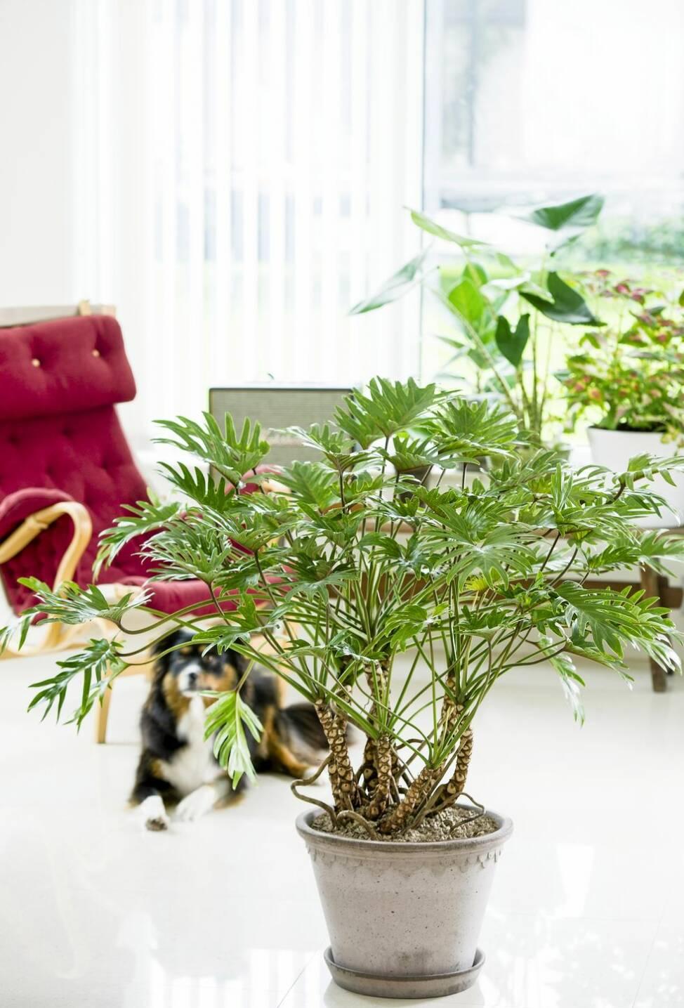 8 trendiga krukväxter – så här sköter du dem i vinter