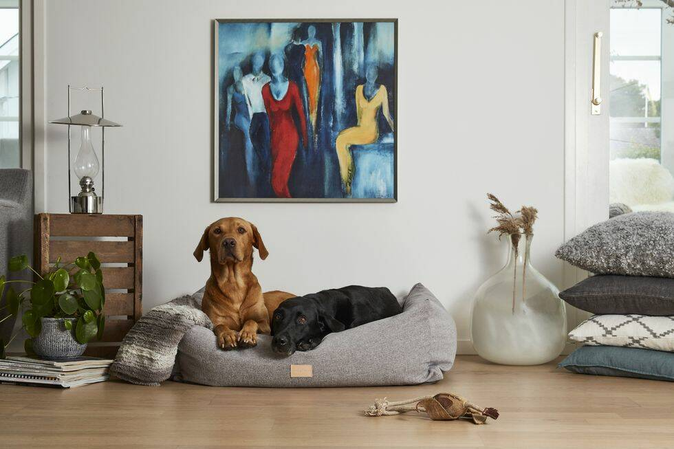 10 fina inredningsprylar till din hund – och dig själv