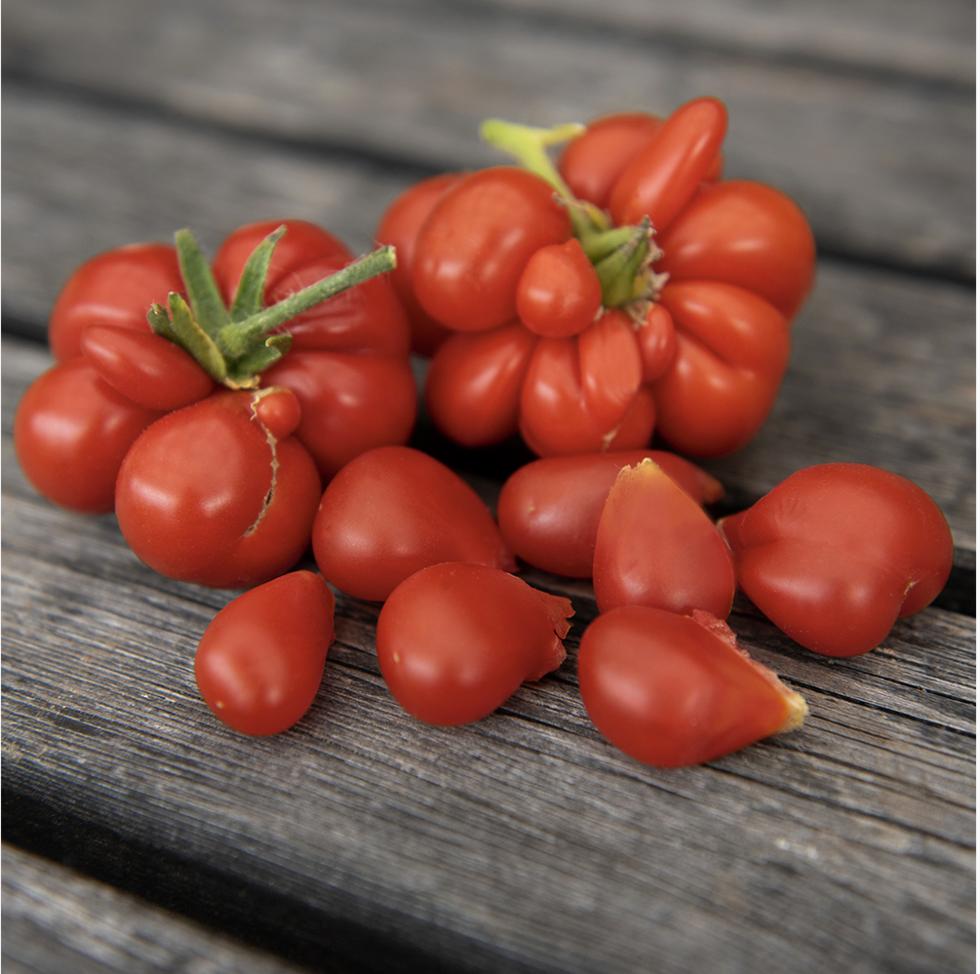 Snart är det dags att så tomater – så här gör du
