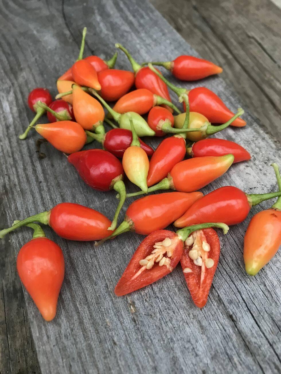 15 nya fröer vi vill plantera i trädgården i vår