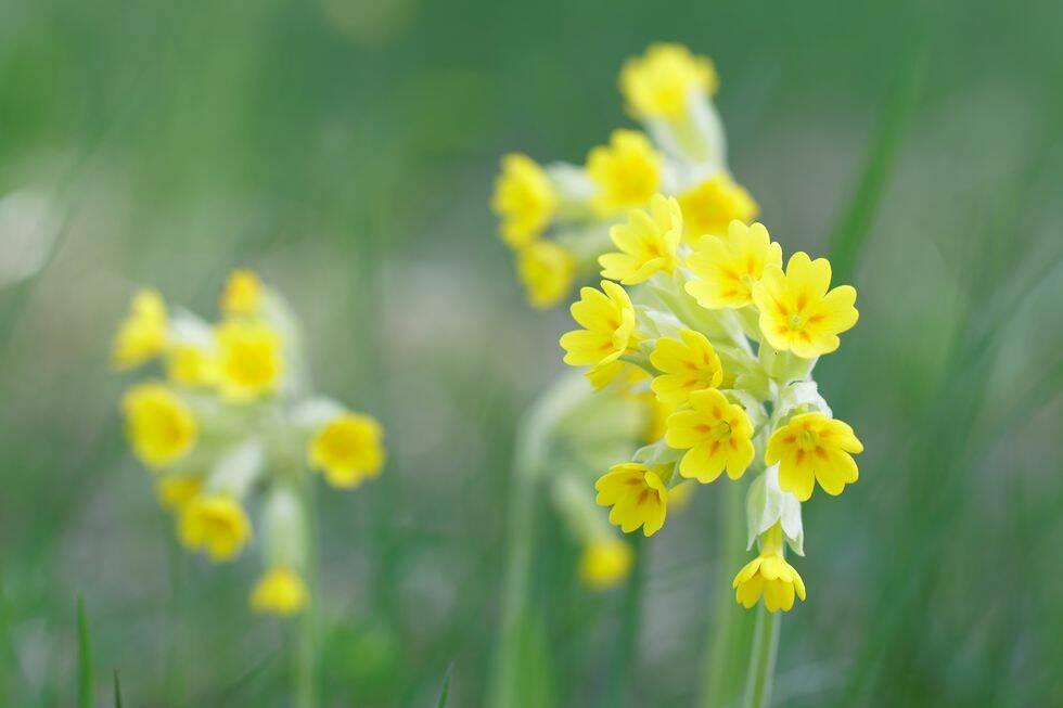 5 torparblommor som ger vårlycka