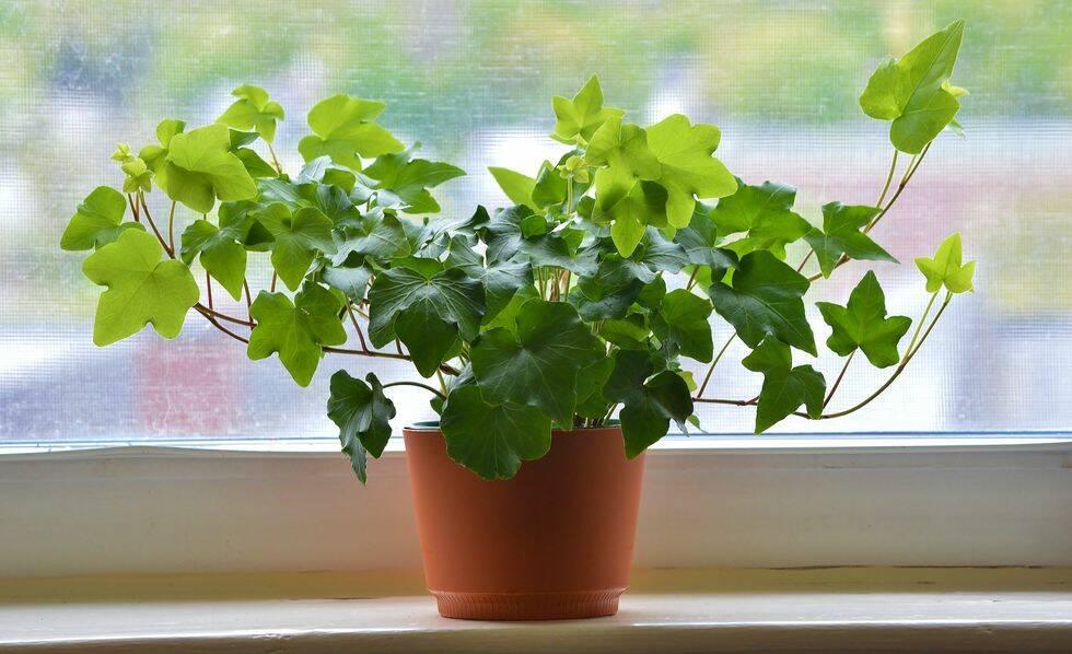 Forskare: Inred med gröna växter – så mår du bättre
