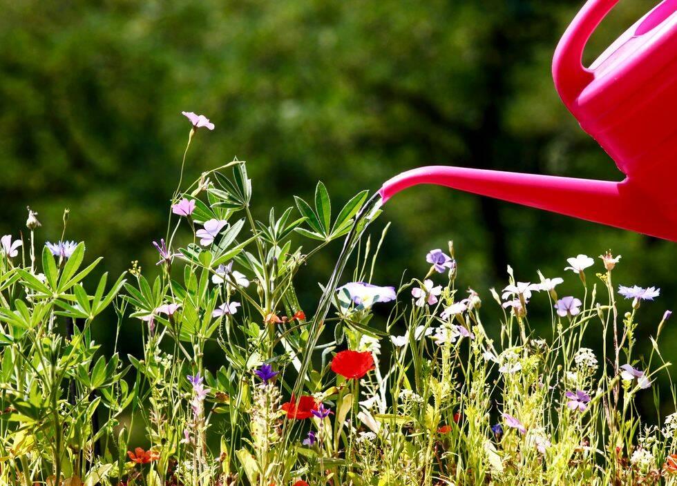 Så vattnar du din trädgård hållbart om det blir torka