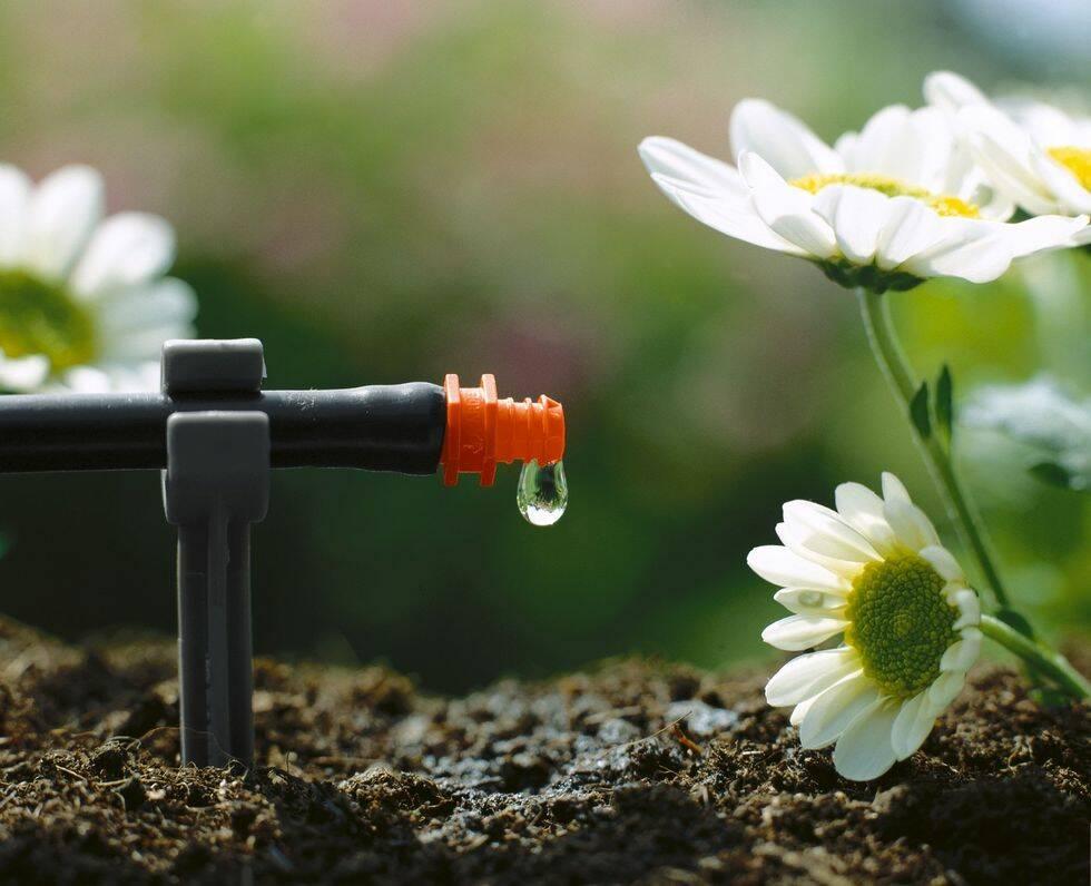 Victoria Skoglunds bästa tips: Så vattnar du miljösmart