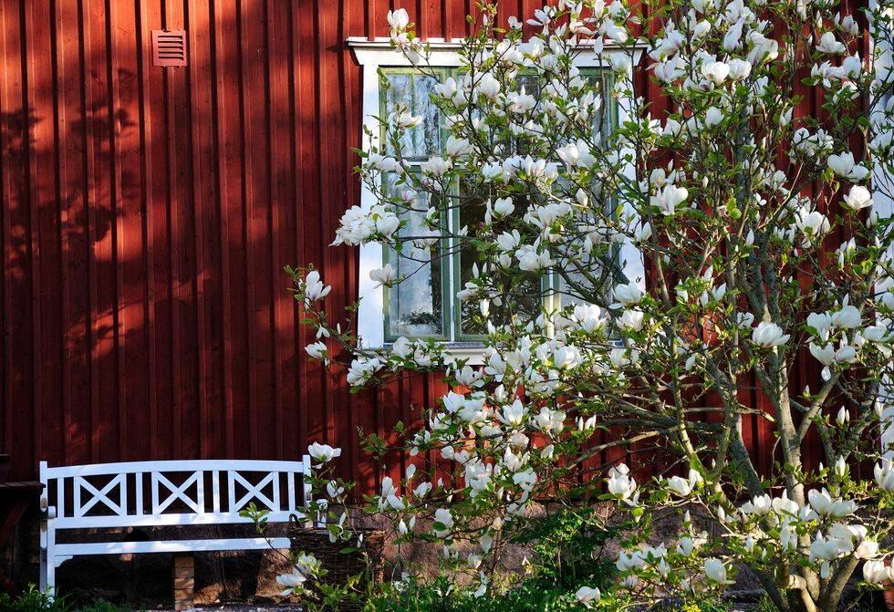 Lyckas med magnolia – 5 tips som fungerar