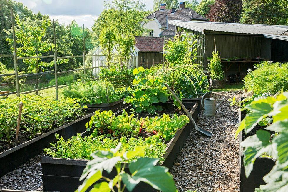 Rabatter gjorda för buketter - så skapar du härliga buketter med blommor från din trädgård