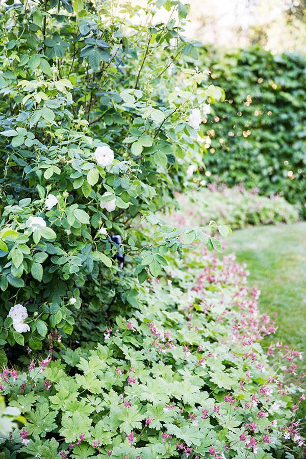 Grön oas med asiatisk touche - trädgårdsarkitekten tipsar