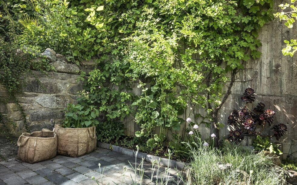 Inspirerande och viktiga tips! Så skapar du en mer hållbar trädgård