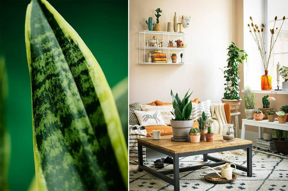 Höstens trendigaste växter – så inreder du med dem
