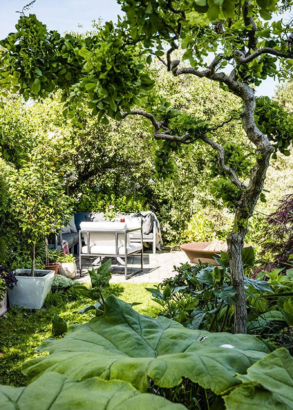 Lummig trädgård med vackra och sällsynta växter