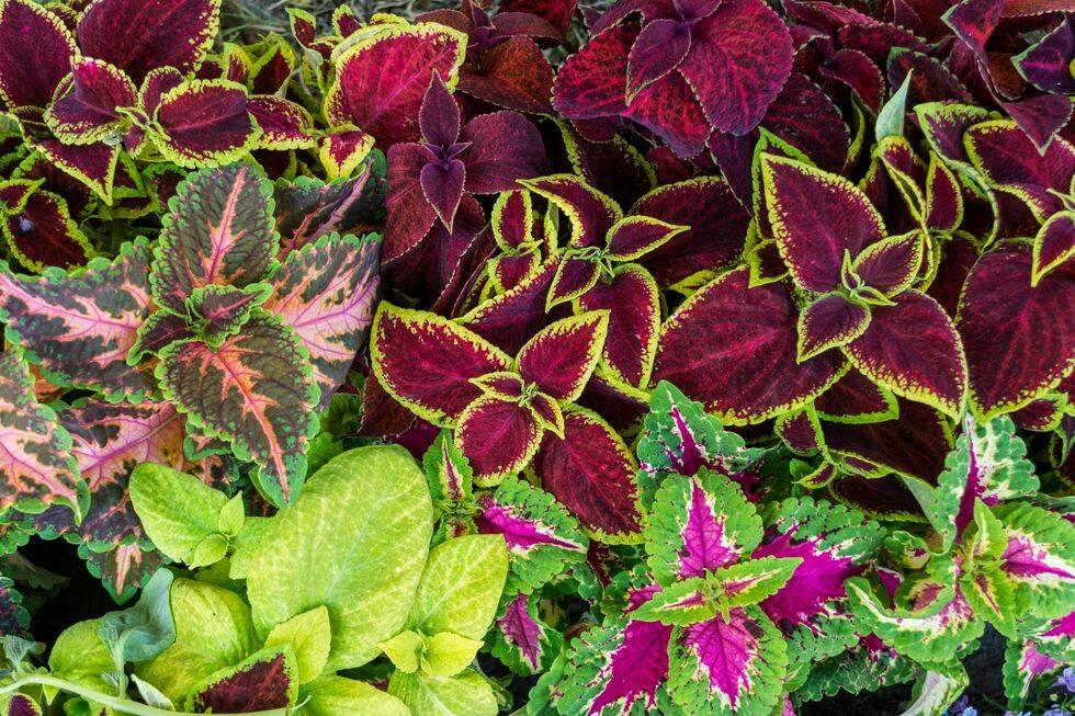 8 skötselråd – så lyckas du med palettblad