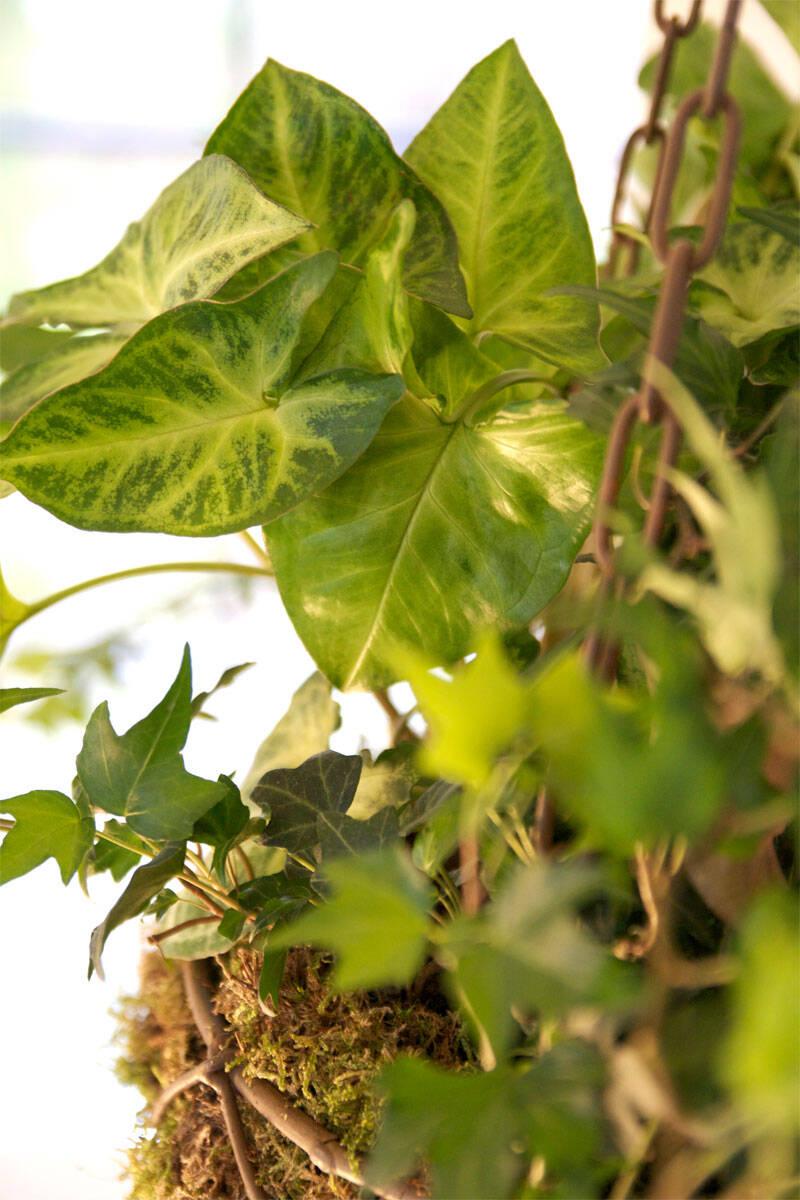 Höstplantering – här är växterna som tål kylan!