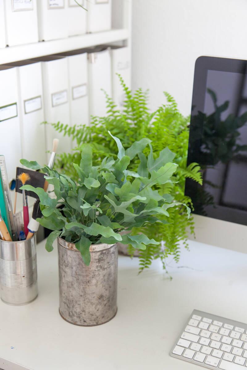 6 trendiga gröna växter som trivs i mörker