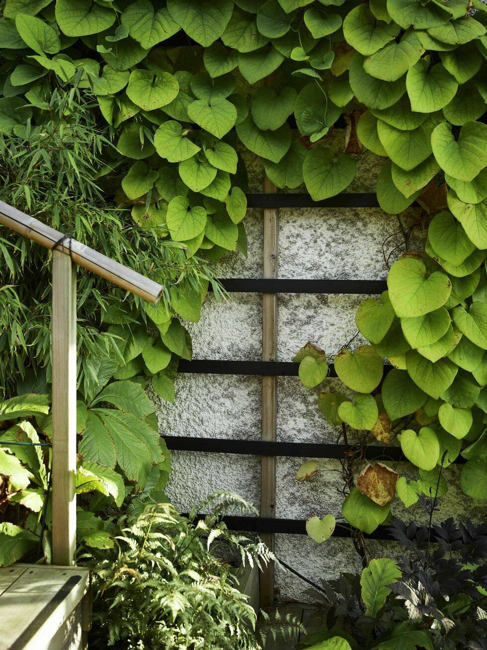 4 tips för hur du skapar den asiatiska stilen i din trädgård