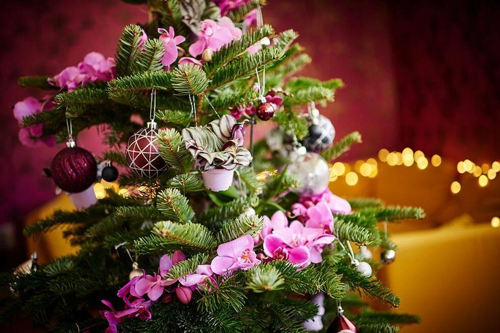Julens trendigaste växter