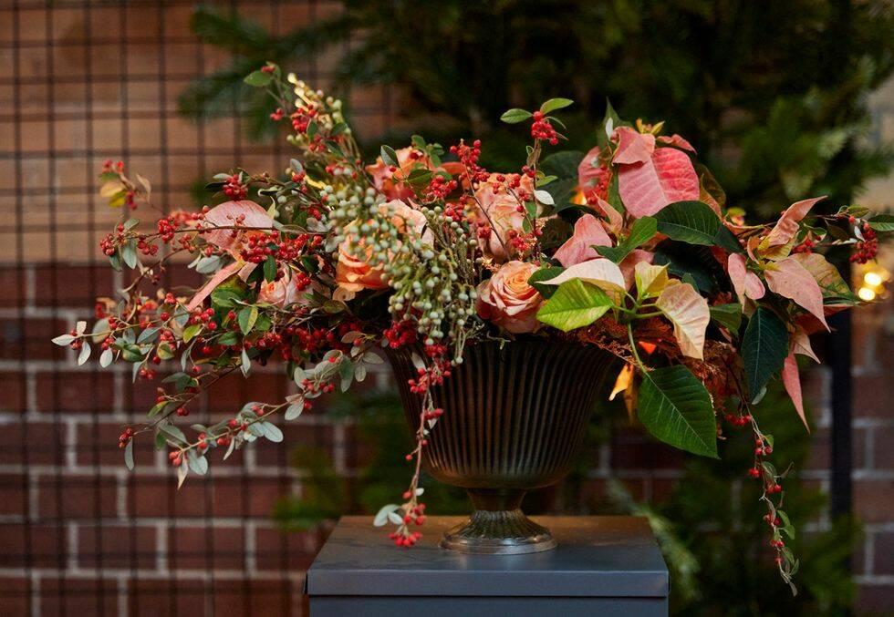 Julstjärnans dag – så sköter du blomman på bästa sätt