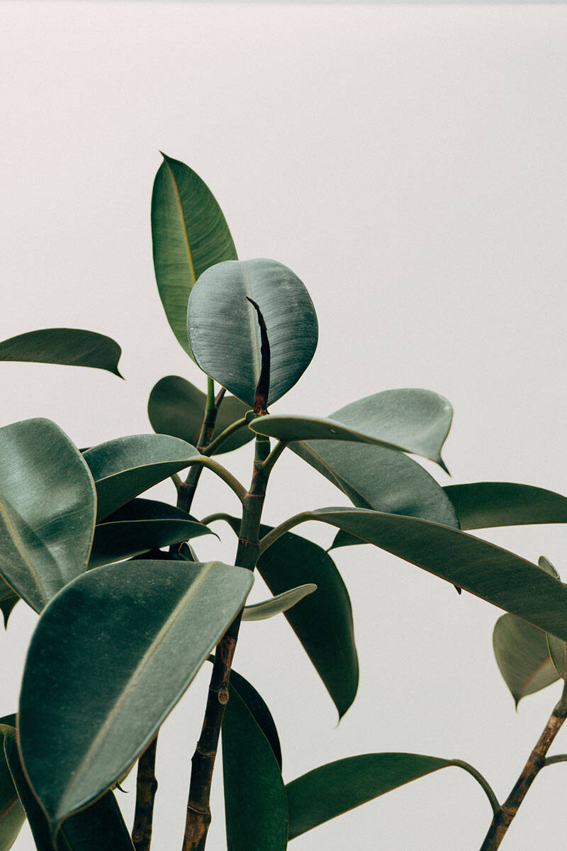 Här är de 10 trendigaste växterna 2020