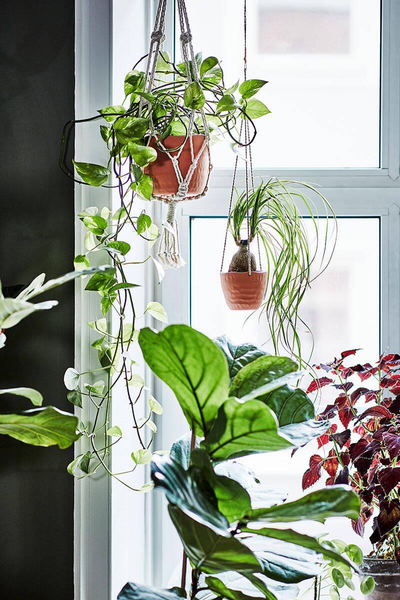 Ikea lanserar kollektionen botanisk – för hemmaodlare