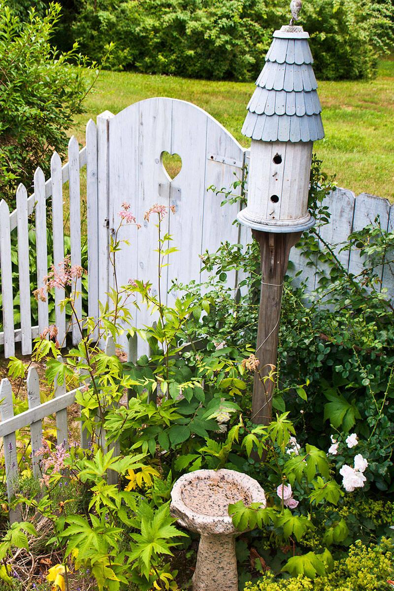 Trädgården är viktigare än du tror – här är experternas bästa tips för biologisk mångfald