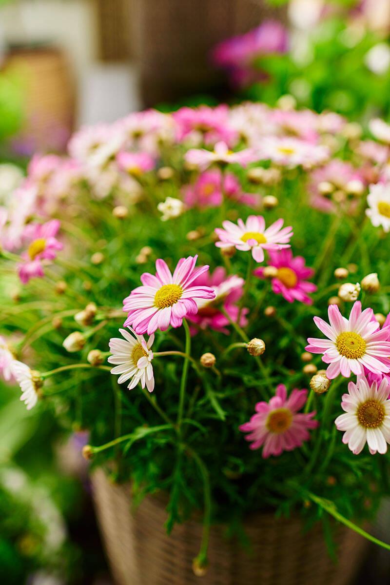 Plantera bivänligt –här är växterna att satsa på