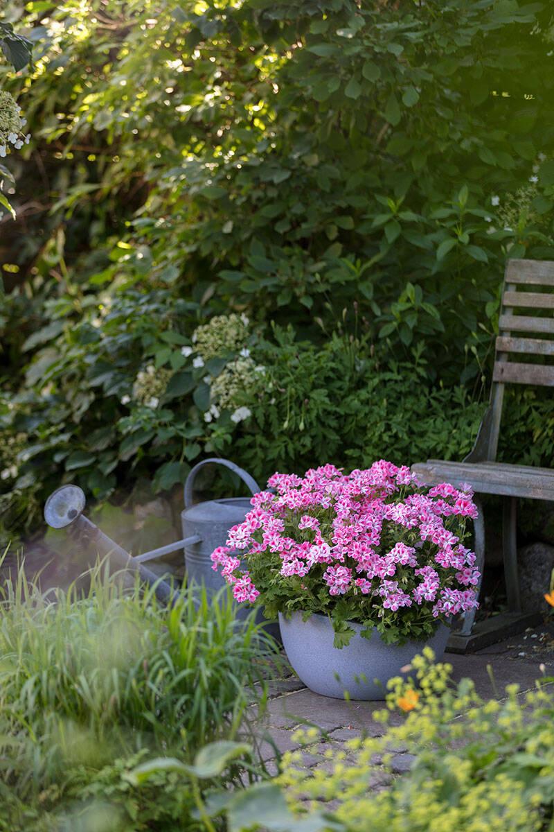 Trädgårdsdesignern tipsar – så planerar du en helt ny trädgård