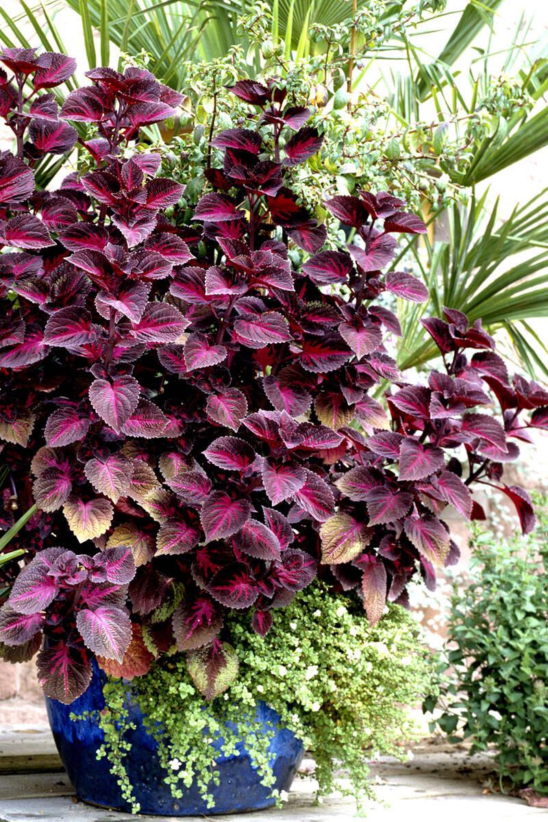Här är höstens 10 största växttrender