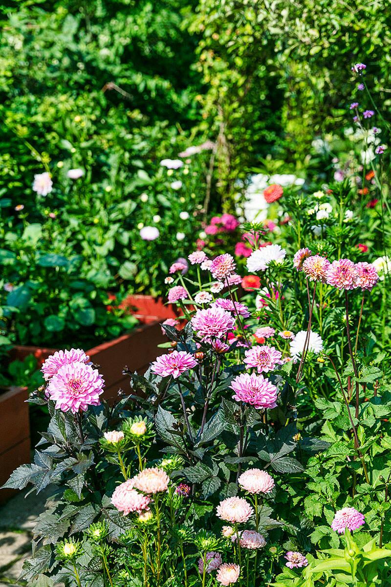 Så skapar du en grönskande mormorsträdgård – 5 tips