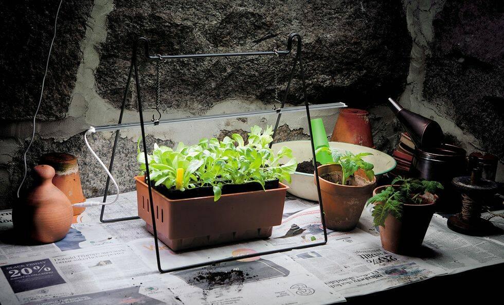 Så lyckas du med inomhusodlingen i vinter –4 tips