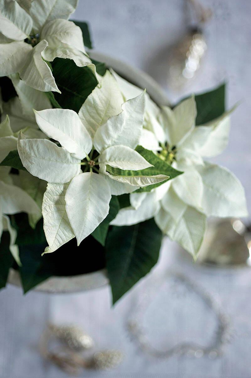 6 sätt att dekorera med vita blommor