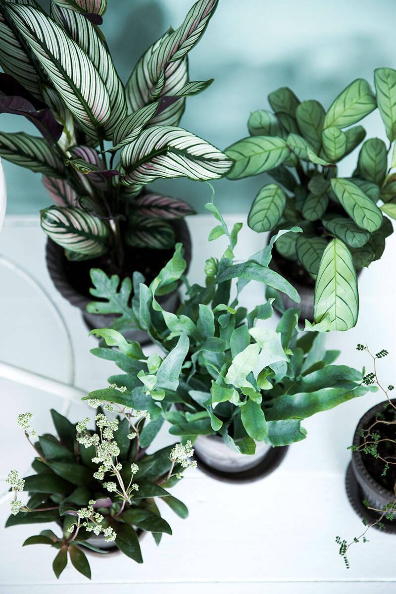 5 tips för att lyckas med dina krukväxter