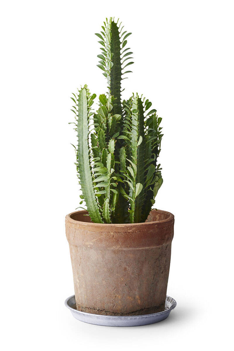Här är vårens trendigaste växter