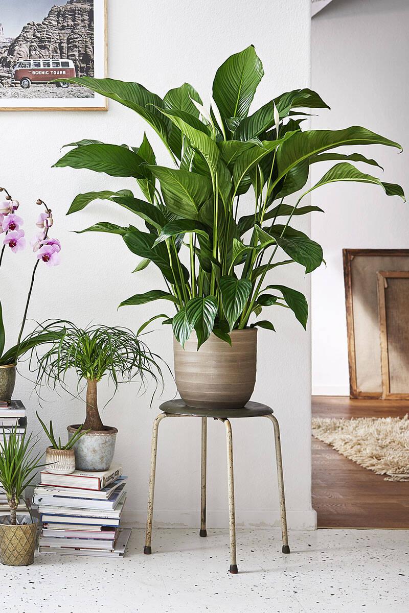 Så får du renare luft hemma– 6 tips