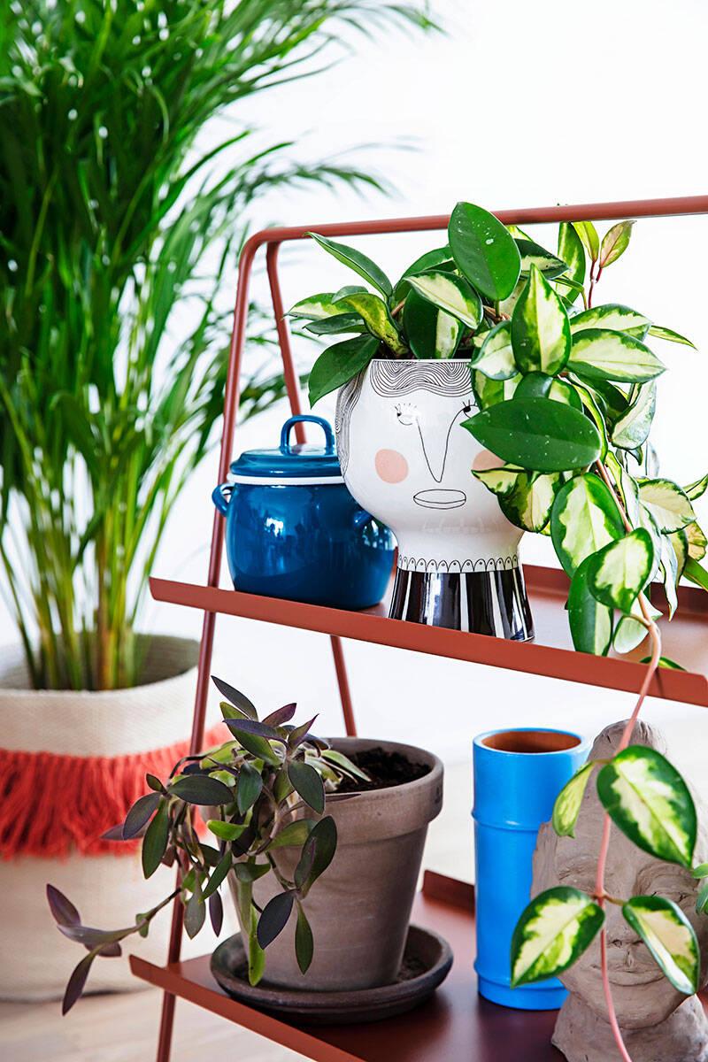 9 fina inredningstips med växter