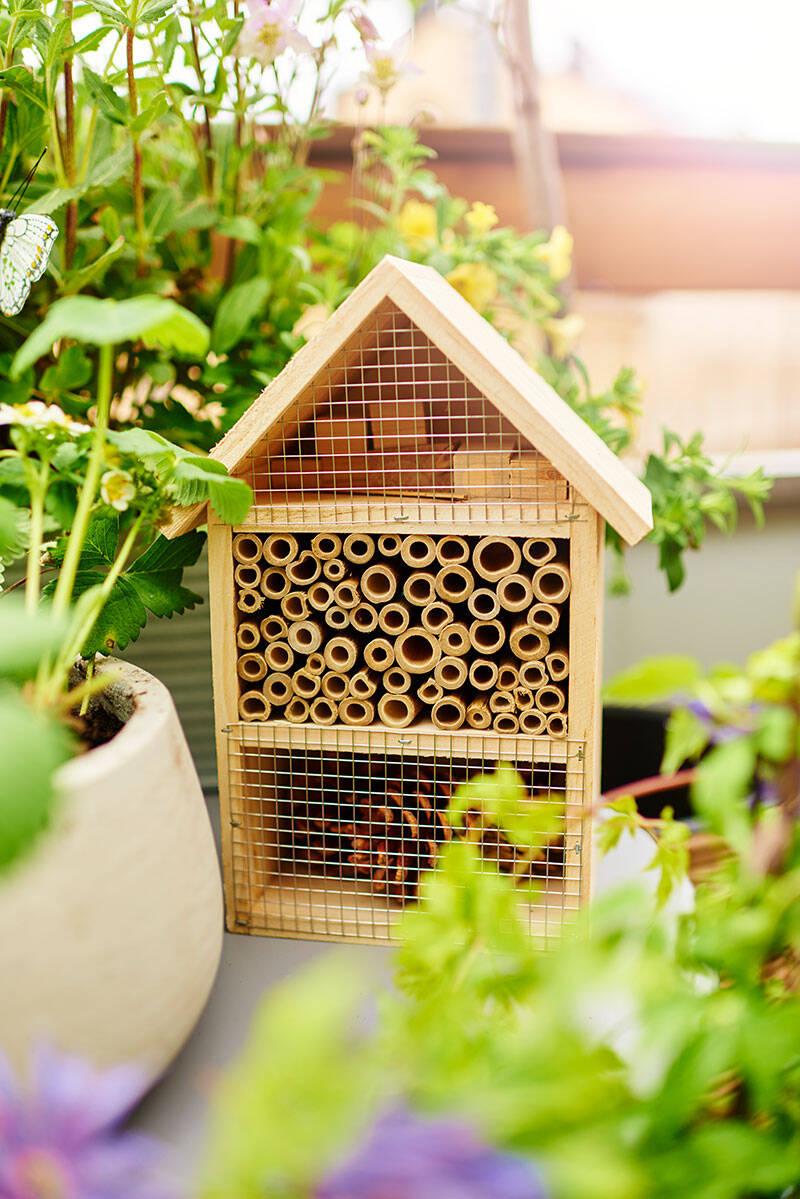 Hjälp trädgårdens bin i sommar –8 viktiga tips