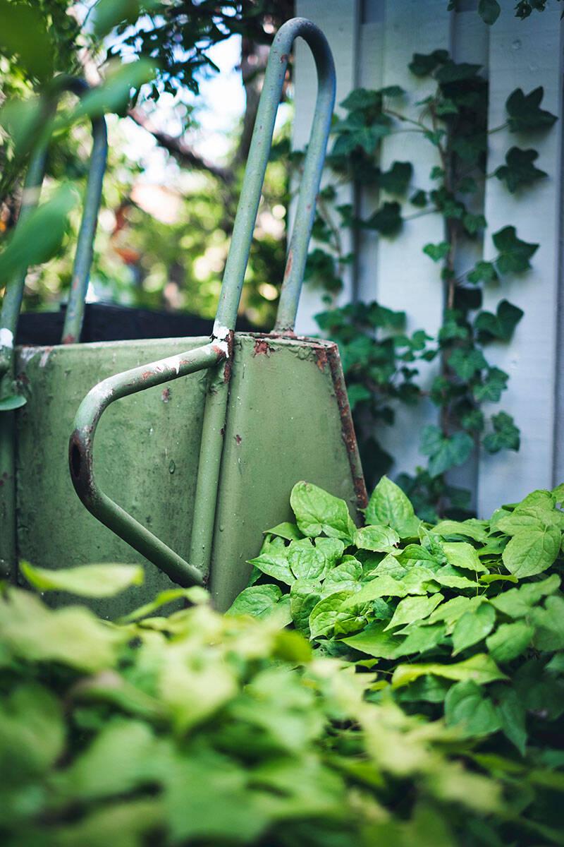 Så planerar du din köksträdgård –5 tips