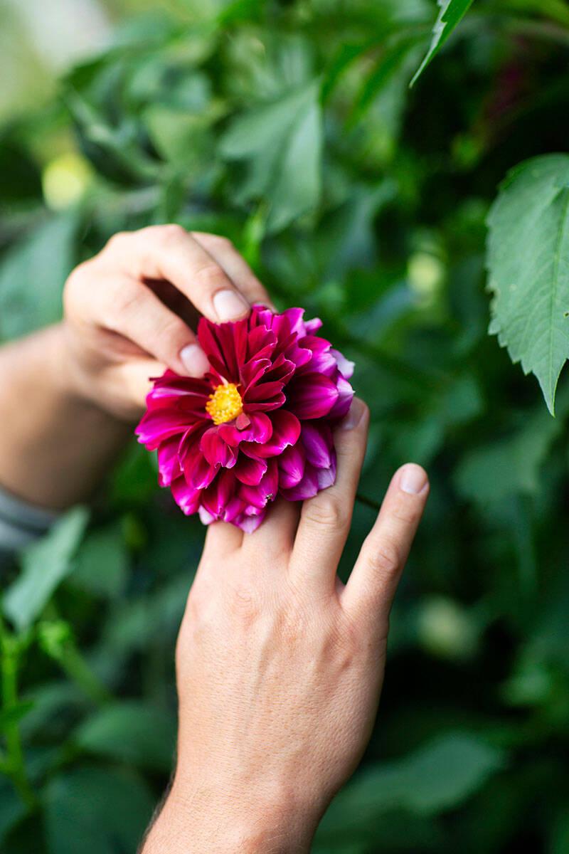 Blomstrande oas i Dalarna –kika in