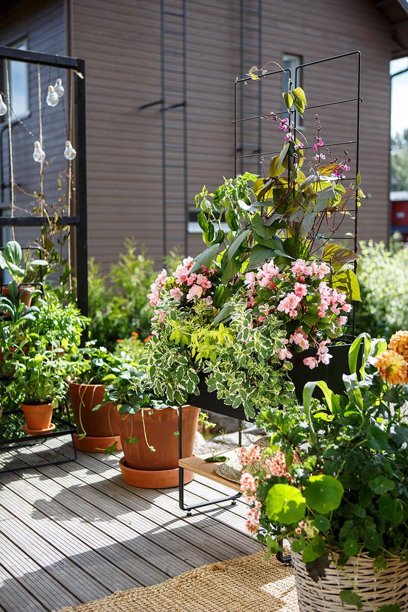 Odla ätbart på balkongen – 7 smarta tips