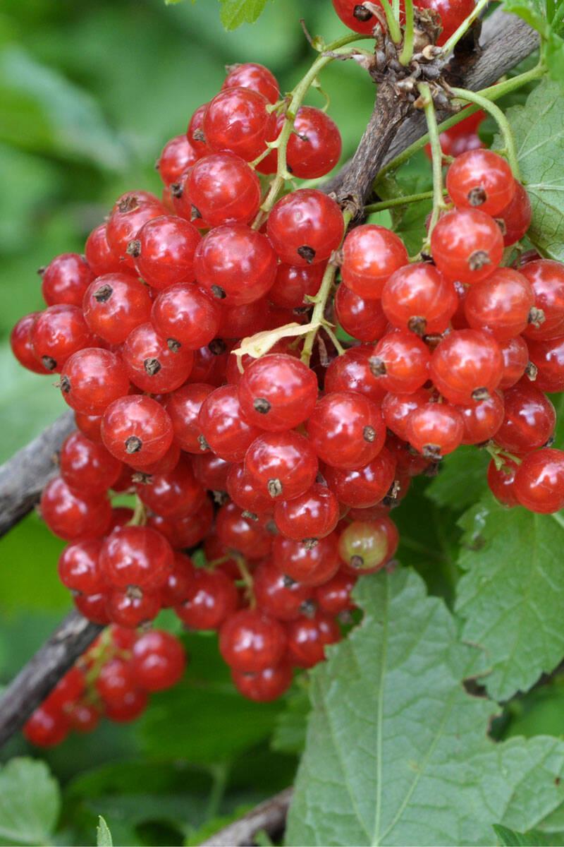 10 pollineringsvänliga växter att satsa på i sommar
