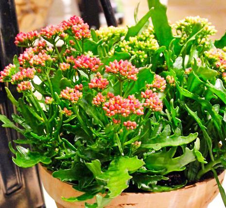 10 inomhusväxter för både sol och skugga
