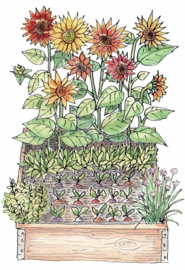Plantera gott och vackert i en pallkrage