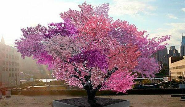 Detta träd bär 40 olika frukter