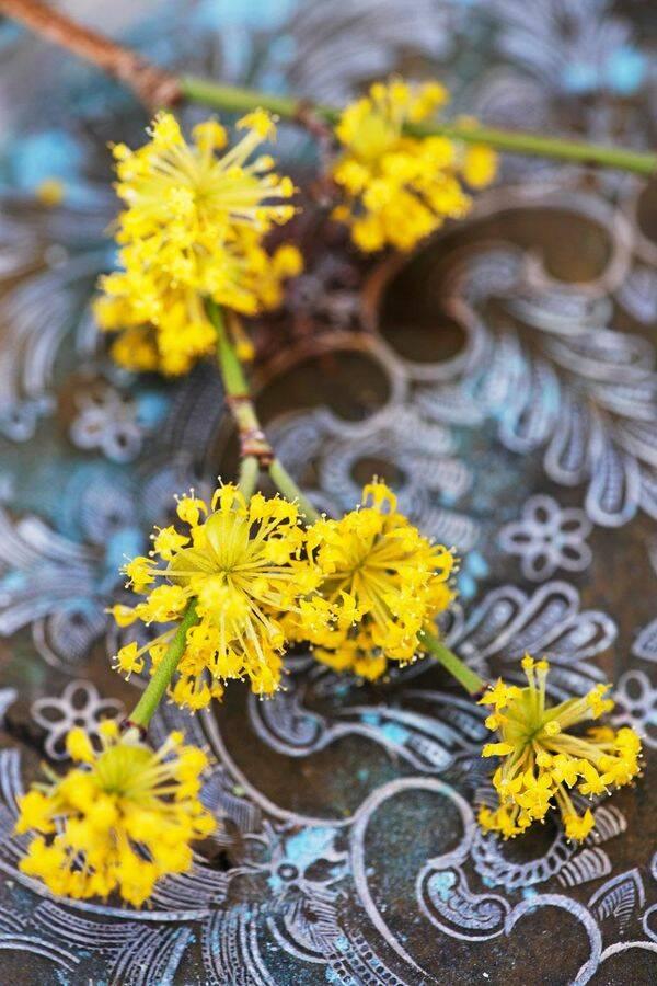 Låt våren flytta in – så får du kvistarna att blomma längre